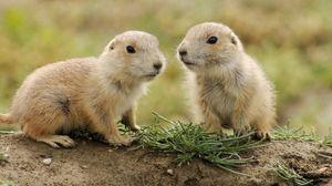 Preview wallpaper animals, couple, small, grass, walk