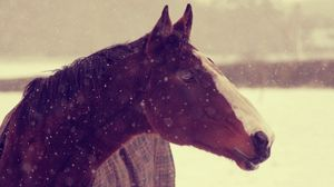 Preview wallpaper animals, horses, horse, face, snow, winter, background