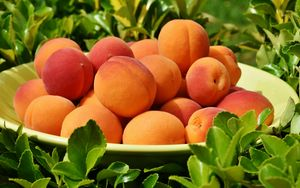 Preview wallpaper apricot, fruit, plate, leaves