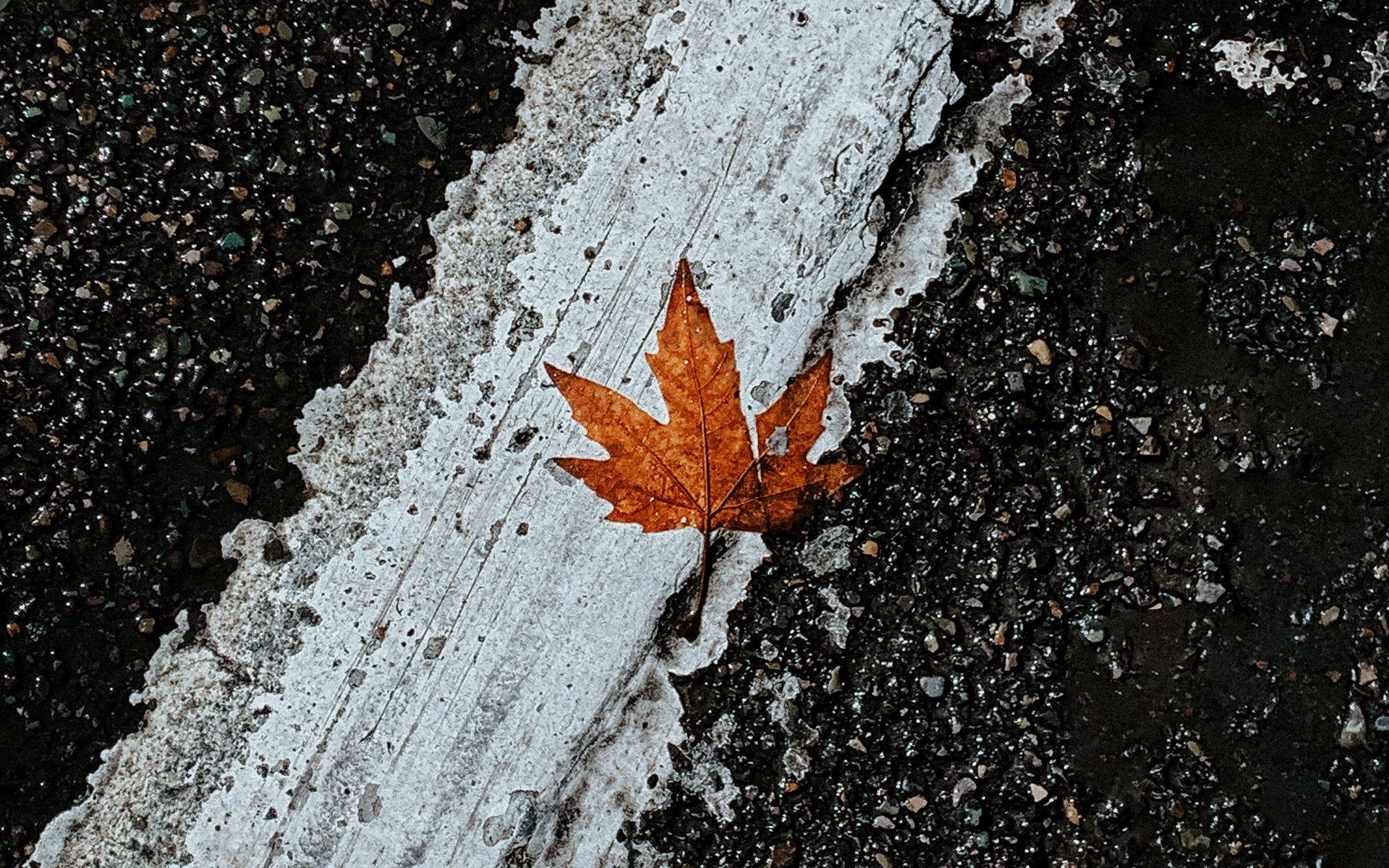 1920x1200 Wallpaper asphalt, leaf, maple, marking, road