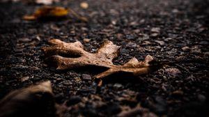 Preview wallpaper asphalt, leaves, dry, macro, autumn