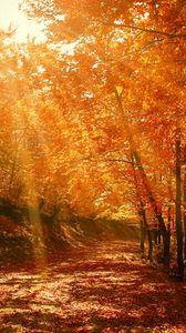 Preview wallpaper autumn, forest, park, foliage, sunlight