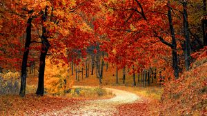 Preview wallpaper autumn, forest, path, foliage, park, colorful