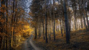 Preview wallpaper autumn, forest, trail, grass, trees