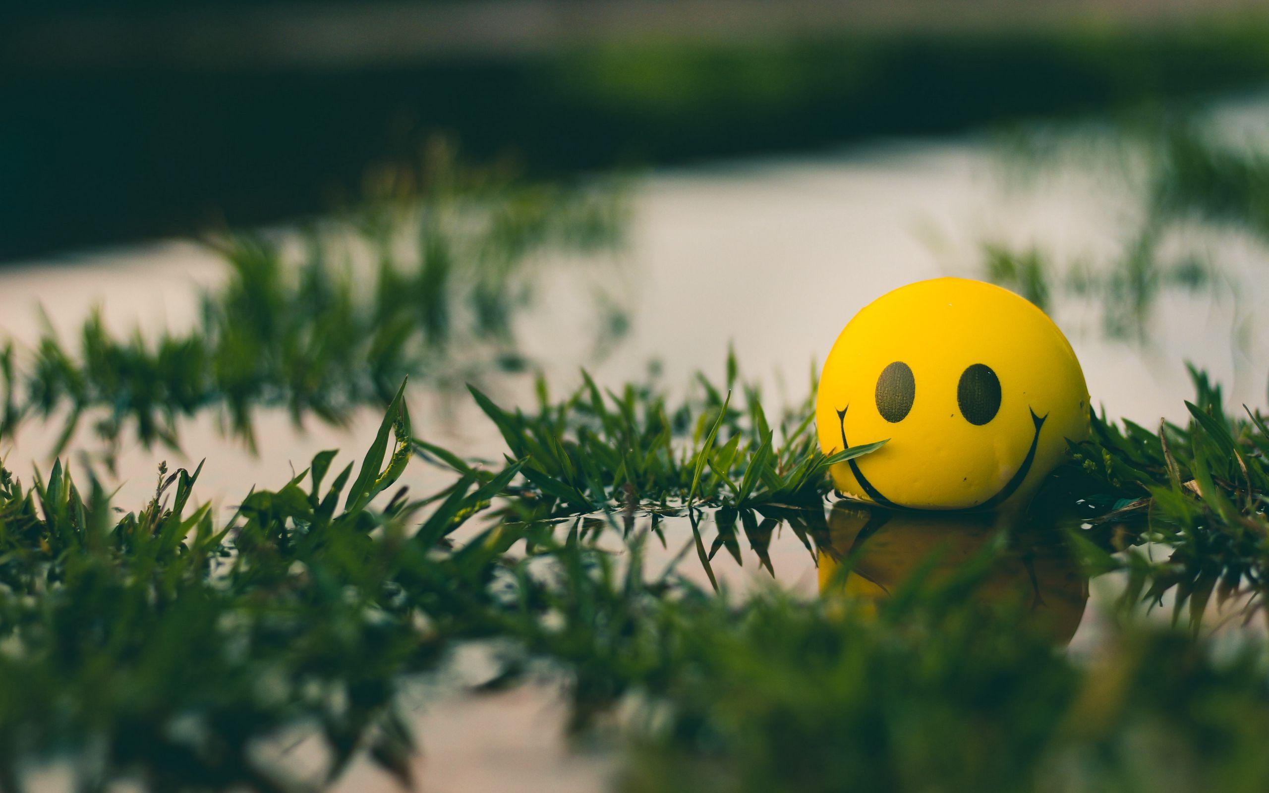 2560x1600 Wallpaper ball, smile, smiley, grass, water