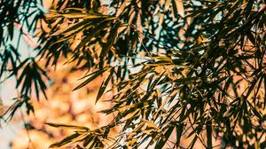 Preview wallpaper bamboo, branches, leaves, plant