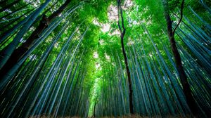 Preview wallpaper bamboo, forest, trees, bottom view