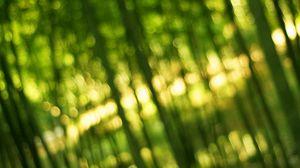 Preview wallpaper bamboo, green, light, bokeh