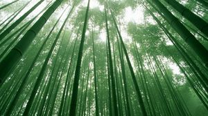 Preview wallpaper bamboo, green, stalks, sky, crones