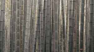 Preview wallpaper bamboo, stems, plant