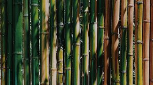 Preview wallpaper bamboo, stems, plant, texture, green