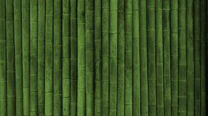 Preview wallpaper bamboo, stick, green, vertical