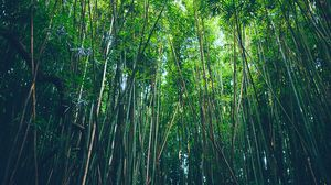 Preview wallpaper bamboo, trees, thickets
