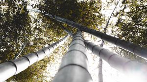 Preview wallpaper bamboo, trunks, plants, leaves, sunlight