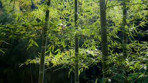 Preview wallpaper bamboo, wood, stalks, tranquillity