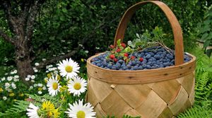 Preview wallpaper basket, berry, bilberry, wild strawberry, camomiles