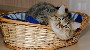 Preview wallpaper basket, underlying, cat, playful