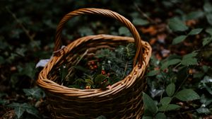 Preview wallpaper basket, wicker, berries, branches, nature