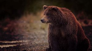 Preview wallpaper bear, brown, wet, sits, toed