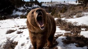 Preview wallpaper bear, grin, grass, snow, aggression