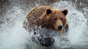 Preview wallpaper bear, run, splash, water