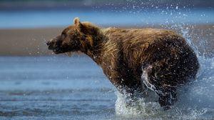 Preview wallpaper bear, run, water, wet