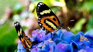 Preview wallpaper beautiful, flowers, sit, butterflies