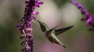 Preview wallpaper beautiful, hummingbird, bird, flowers