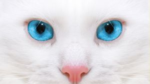 Preview wallpaper beautiful, white cat, kitten, close-up