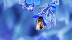 Preview wallpaper bee, flower, macro, blue