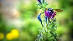 Preview wallpaper bee, flower, nectar, macro