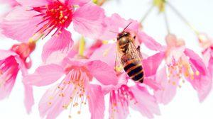 Preview wallpaper bee, flower, pollen, pink, petals