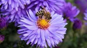 Preview wallpaper bee, flower, pollination