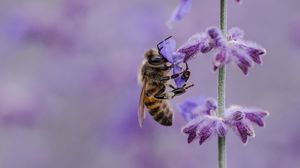 Preview wallpaper bee, flower, pollination, insect, macro, lilac