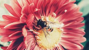 Preview wallpaper bee, flower, pollination, insect, petals