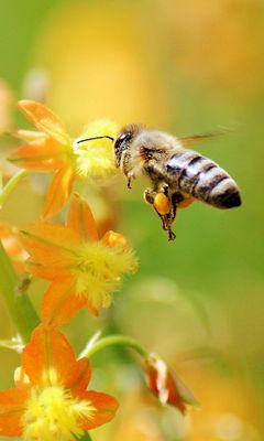 240x400 Wallpaper bee, flying, grass, plant
