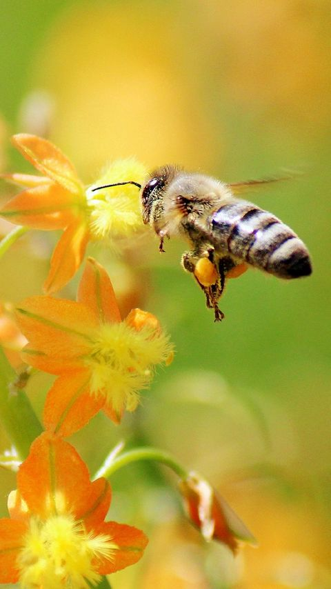 480x854 Wallpaper bee, flying, grass, plant