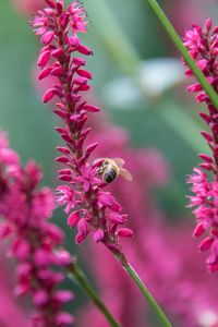 Preview wallpaper bee, insect, flowers, plants, macro, pink