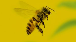 Preview wallpaper bee, insect, macro, yellow