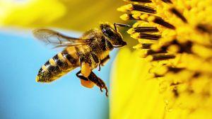 Preview wallpaper bee, sunflower, macro, flower, pollen