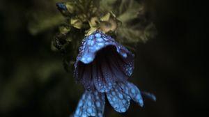 Preview wallpaper bell, flowers, drops, macro, dark