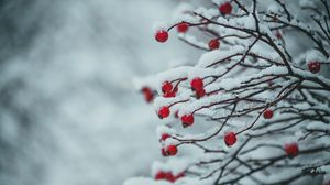 Preview wallpaper berries, branches, snow, plant, winter
