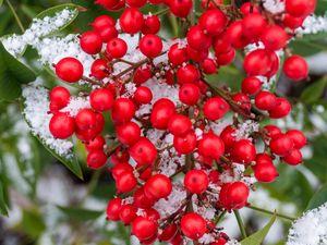 Preview wallpaper berries, bunch, snow, macro, red