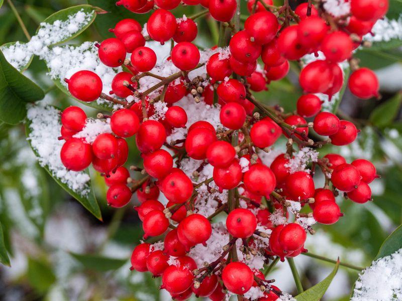 800x600 Wallpaper berries, bunch, snow, macro, red