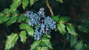 Preview wallpaper berries, bush, leaves, blur