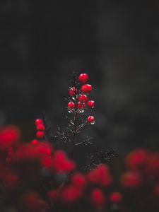 Preview wallpaper berries, drops, macro, red, wet