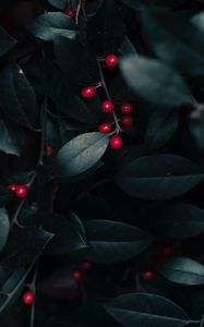 Preview wallpaper berries, leaves, branches, macro