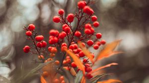 Preview wallpaper berries, red, macro, leaves, branches