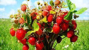 Preview wallpaper berries, tasty, leaves
