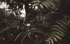 Preview wallpaper bicycle, branches, leaves, trees, dark